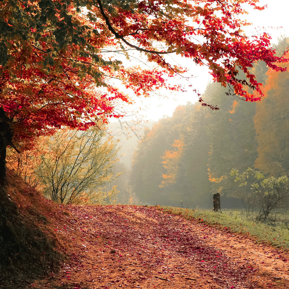 the best things about autumn