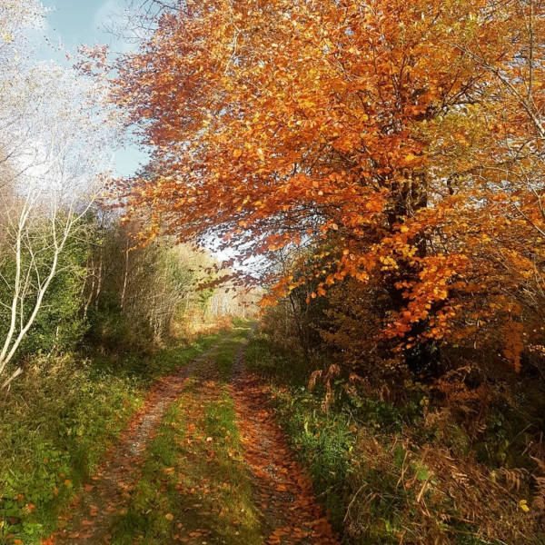 autumn creativity and slow living